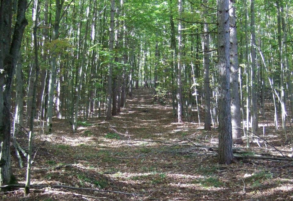 Deciduous trail 2