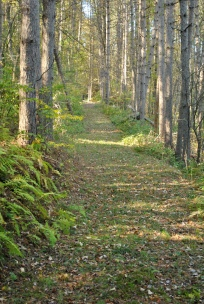Deciduous trail, view looking north