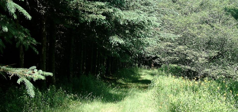 The Flats, running North-South along Kidd Brook
