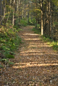 Wooded trail at Zeleny Les